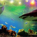 img_aquaria